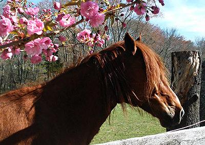 horse_farm_ri