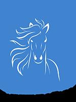 Fairwinds Farm | Horse Riding Clinics, Workshops