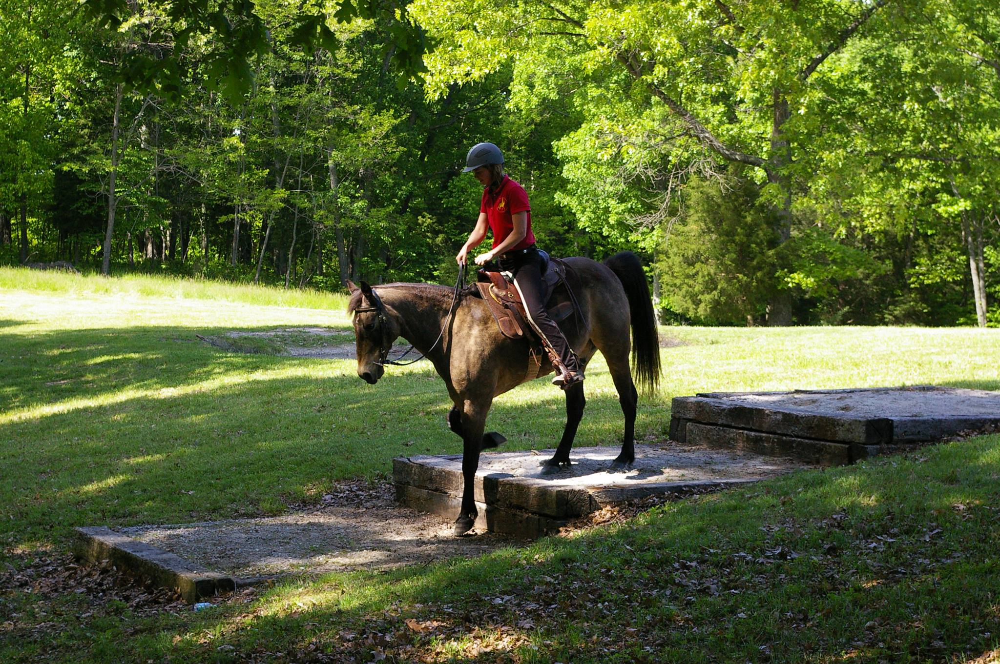 Events  Fairwinds Farm  Horse Riding Clinics Workshops